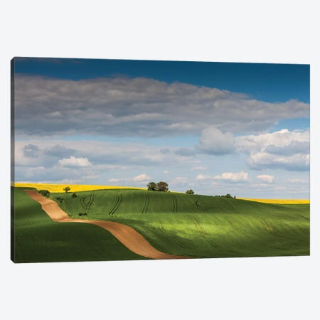 Czech Republic, Moravia, Rapeseed Field I Canvas Print #LAJ93} by Mikolaj Gospodarek Canvas Artwork