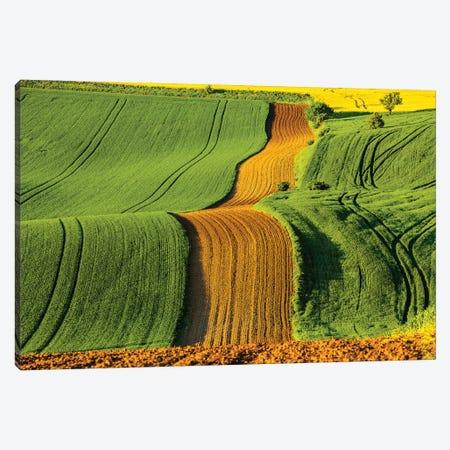 Czech Republic, Moravia, Rapeseed Field II Canvas Print #LAJ94} by Mikolaj Gospodarek Canvas Art Print