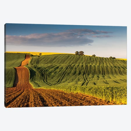 Czech Republic, Moravia, Rapeseed Field III Canvas Print #LAJ95} by Mikolaj Gospodarek Canvas Print