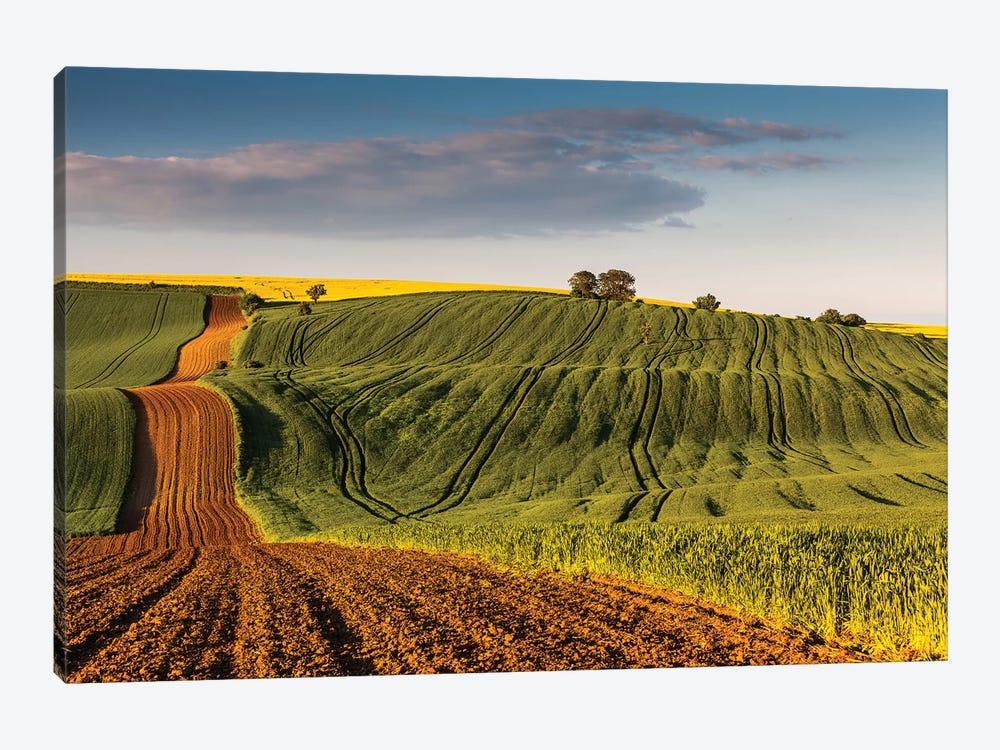Czech Republic, Moravia, Rapeseed Field III by Mikolaj Gospodarek 1-piece Canvas Artwork