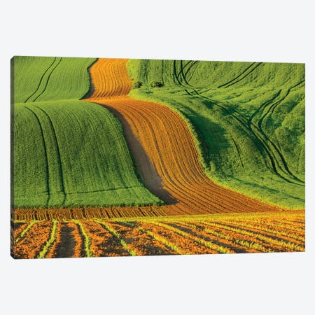 Czech Republic, Moravia, Rapeseed Field IV Canvas Print #LAJ96} by Mikolaj Gospodarek Art Print