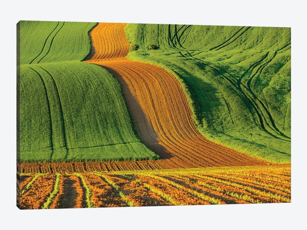Czech Republic, Moravia, Rapeseed Field IV by Mikolaj Gospodarek 1-piece Art Print