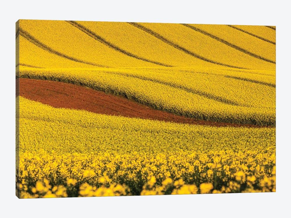 Czech Republic, Moravia, Rapeseed Field V by Mikolaj Gospodarek 1-piece Canvas Art