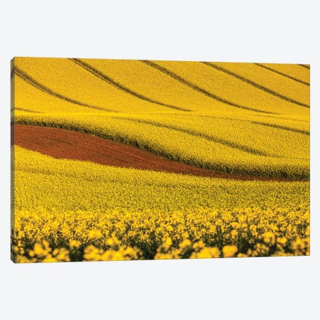 Czech Republic, Moravia, Rapeseed Field V Canvas Print #LAJ97} by Mikolaj Gospodarek Canvas Art Print