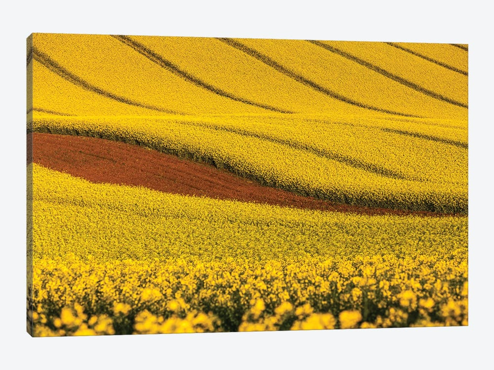 Czech Republic, Moravia, Rapeseed Field V 1-piece Canvas Art