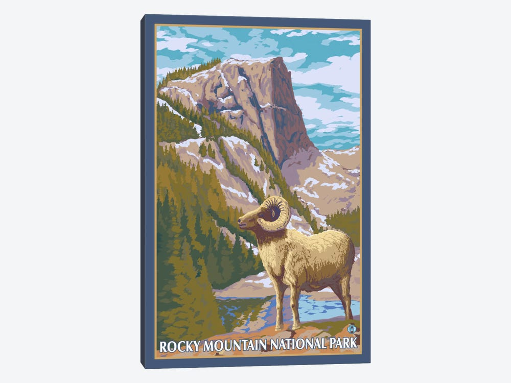 Rocky Mountain National Park (Big Horn Sheep) by Lantern Press 1-piece Canvas Print