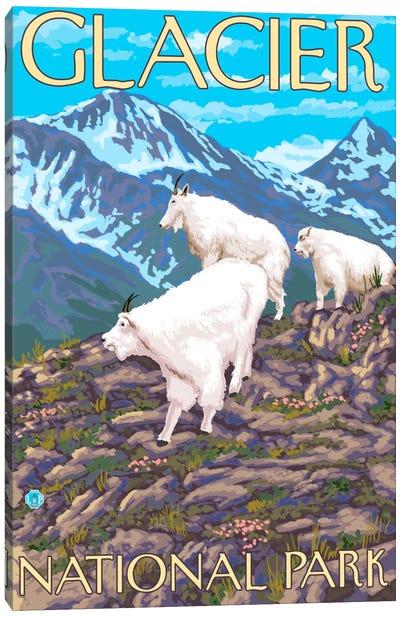 Glacier National Park (Mountain Goats) Canvas Art Print