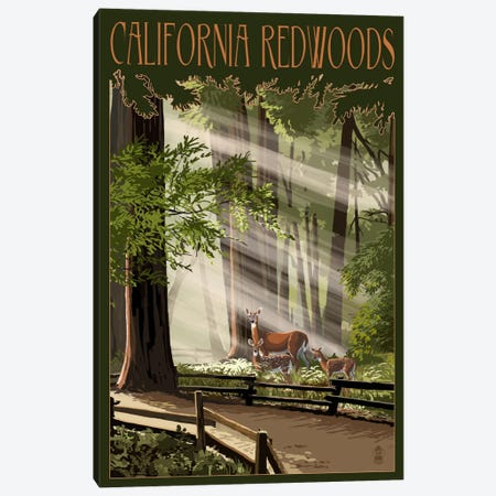 California Redwoods Canvas Print #LAN9} by Lantern Press Canvas Artwork