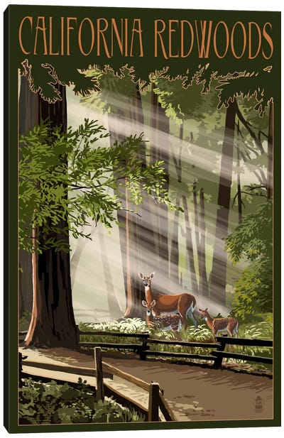 California Redwoods Canvas Print #LAN9
