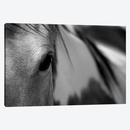 One Eye Canvas Print #LAT10} by Lu Anne Tyrrell Canvas Art