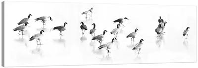 Flock Of Canada Geese Canvas Art Print