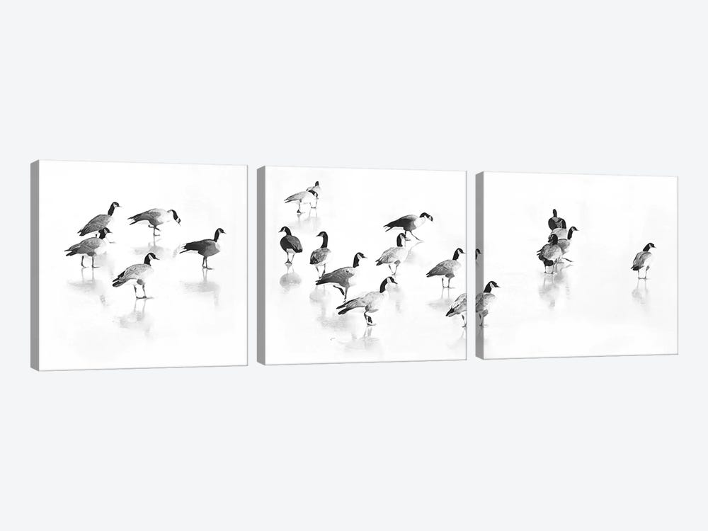 Flock Of Canada Geese by Lu Anne Tyrrell 3-piece Canvas Art Print