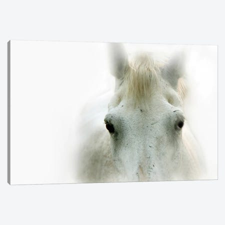 Blanco Canvas Print #LAT3} by Lu Anne Tyrrell Canvas Print