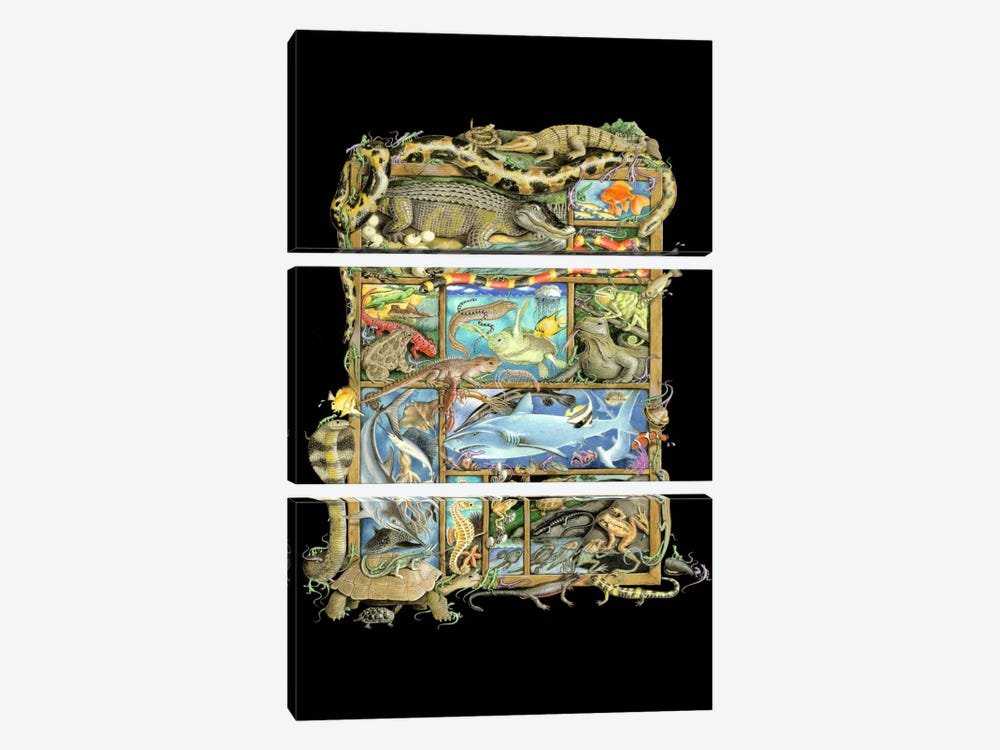 Reptiles, Fish & Amphibians by Laura Seeley 3-piece Canvas Print