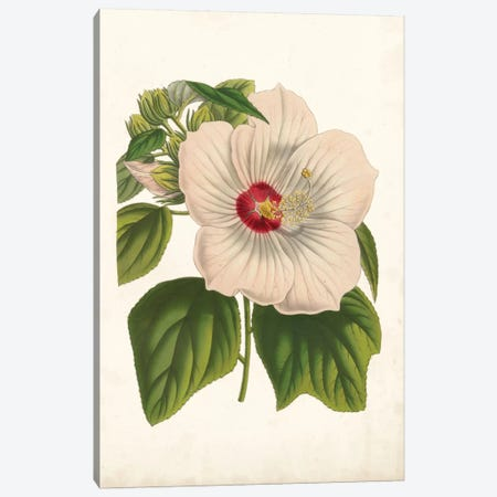 Striking Hibiscus Canvas Print #LBH1} by Louis Benoît van Houtte Art Print