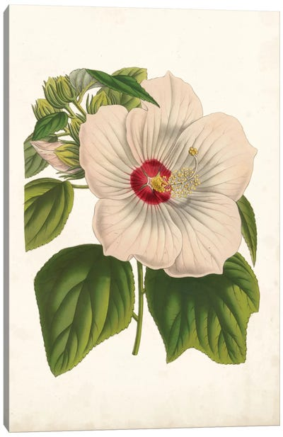 Striking Hibiscus Canvas Art Print