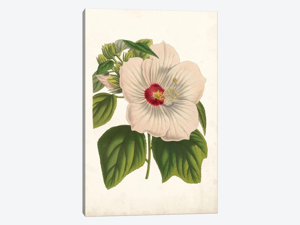 Striking Hibiscus by Louis Benoît van Houtte 1-piece Canvas Wall Art