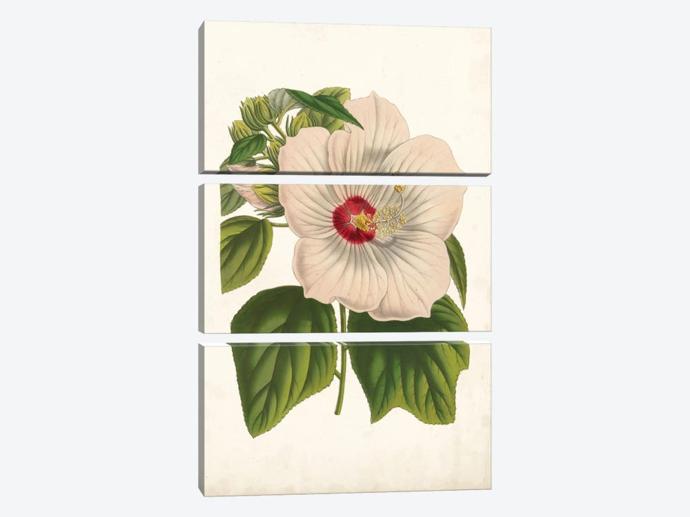Striking Hibiscus by Louis Benoît van Houtte 3-piece Canvas Art