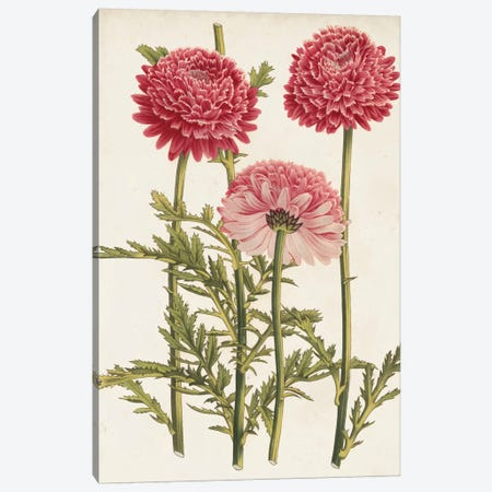 Vintage Garden Beauties I Canvas Print #LBH3} by Louis Benoît van Houtte Canvas Print