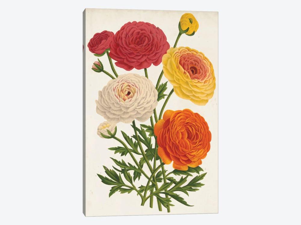 Vintage Garden Beauties II by Louis Benoît van Houtte 1-piece Art Print