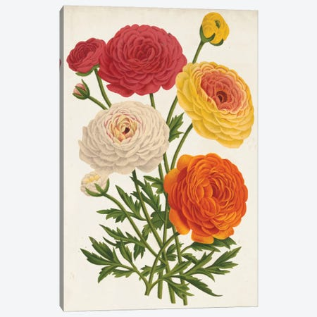 Vintage Garden Beauties II Canvas Print #LBH4} by Louis Benoît van Houtte Canvas Artwork
