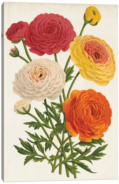 Vintage Garden Beauties II Canvas Art Print