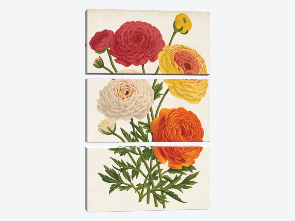 Vintage Garden Beauties II by Louis Benoît van Houtte 3-piece Art Print