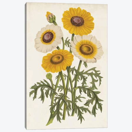 Vintage Garden Beauties III Canvas Print #LBH5} by Louis Benoît van Houtte Canvas Art