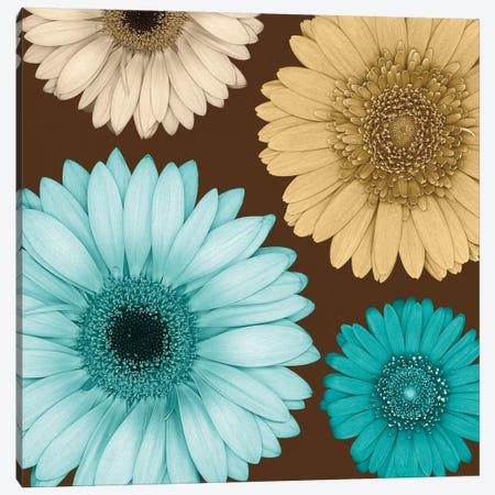 Daisy Quartet I Canvas Print #LBL1} by Lindsay Blake Canvas Print