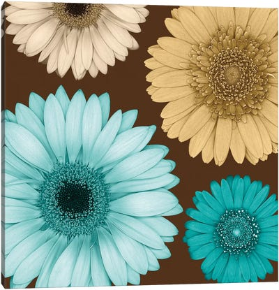 Daisy Quartet I Canvas Art Print