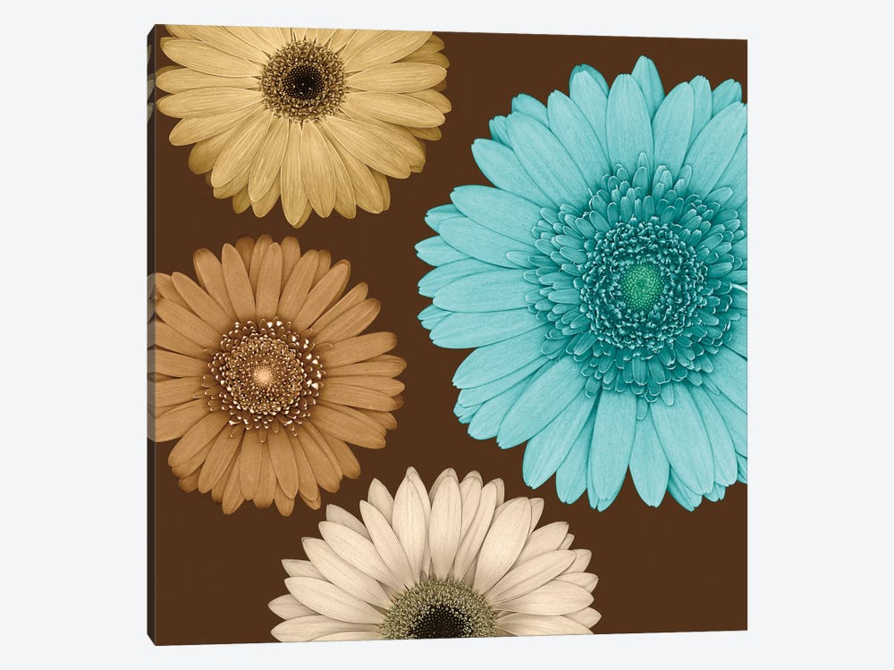 Daisy Quartet II by Lindsay Blake 1-piece Canvas Print