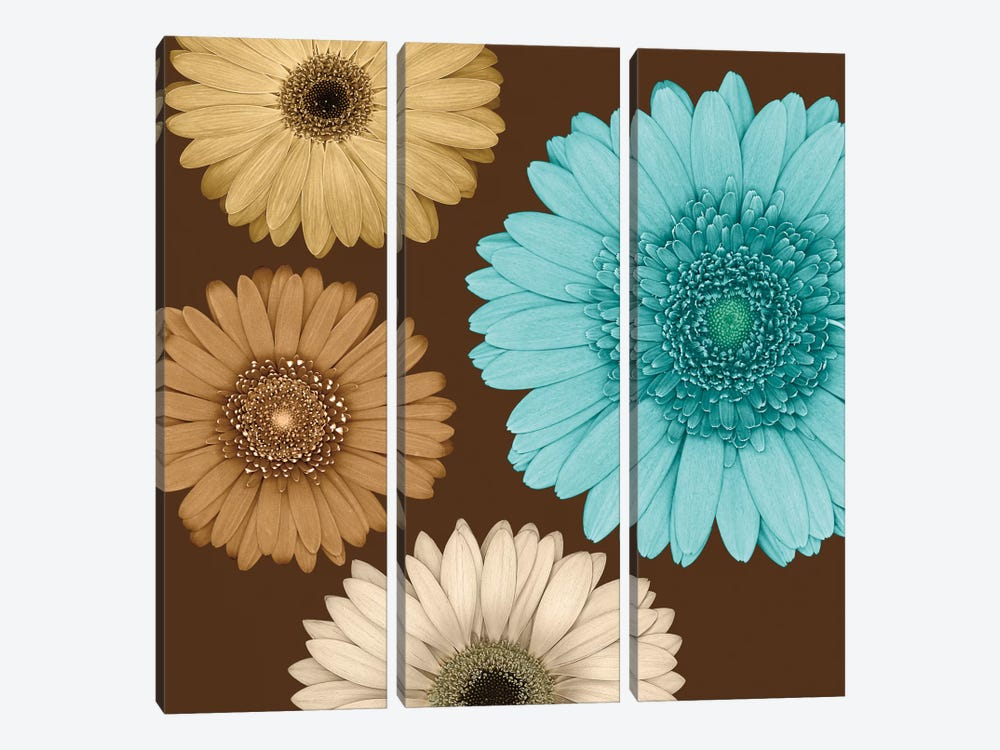 Daisy Quartet II by Lindsay Blake 3-piece Canvas Art Print