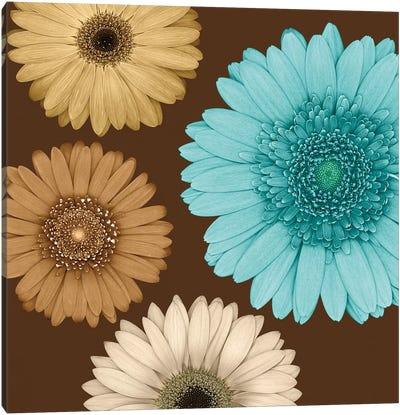 Daisy Quartet II Canvas Art Print