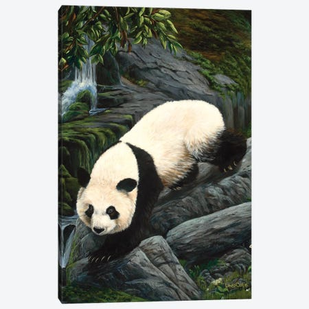 Panda Climbing Down Canvas Print #LCR29} by Laura Curtin Canvas Artwork