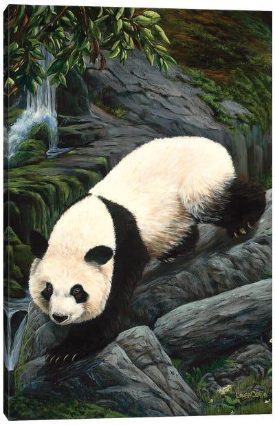 Panda Climbing Down Canvas Art Print