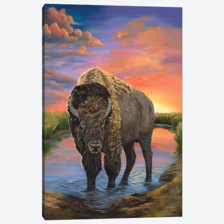 American Bison Canvas Print #LCR2} by Laura Curtin Canvas Print
