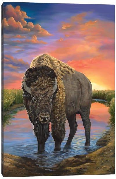 American Bison Canvas Art Print