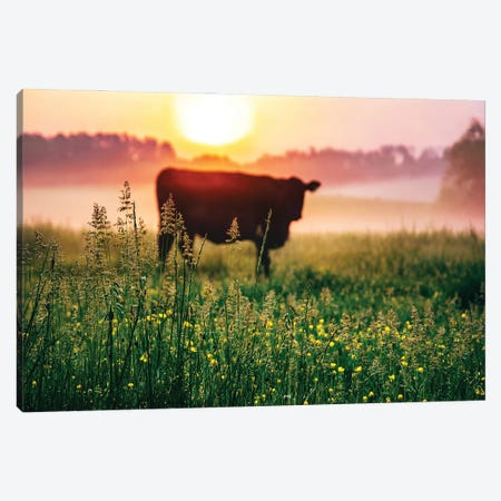 Cow Sunrise Canvas Print #LCS114} by Lucas Moore Canvas Artwork