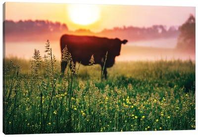 Cow Sunrise Canvas Art Print