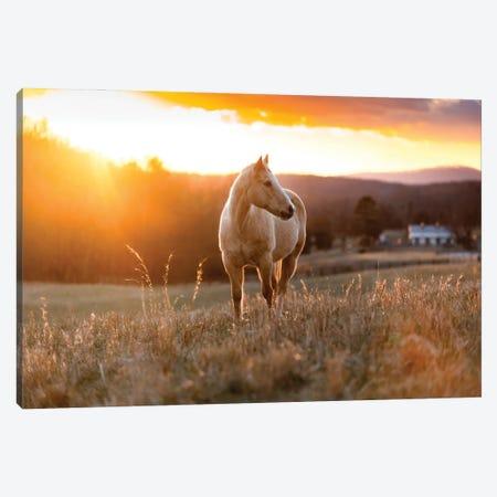 Golden Horse Canvas Print #LCS132} by Lucas Moore Art Print