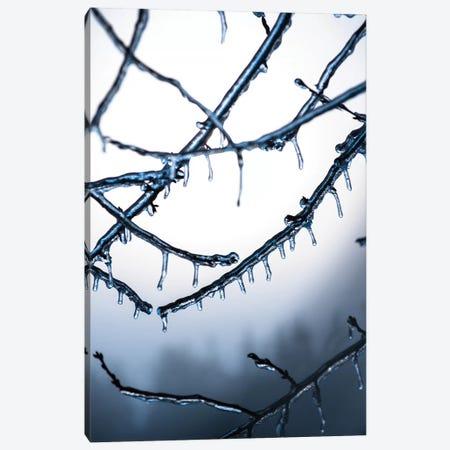Frozen Canvas Print #LCS34} by Lucas Moore Canvas Print