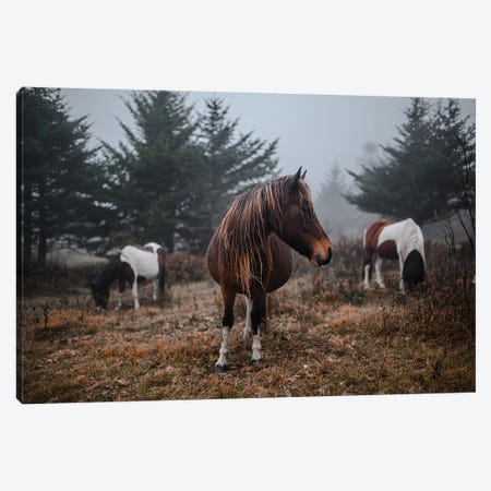 In The Wild Canvas Print #LCS44} by Lucas Moore Canvas Wall Art