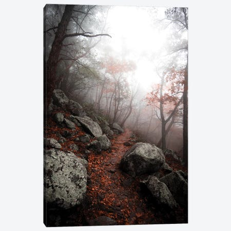 Moody Forest 3-Piece Canvas #LCS59} by Lucas Moore Canvas Artwork