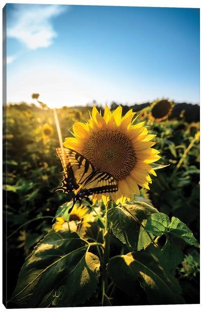Sunflower Love Canvas Art Print