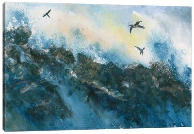 Galapagos Canvas Art Print