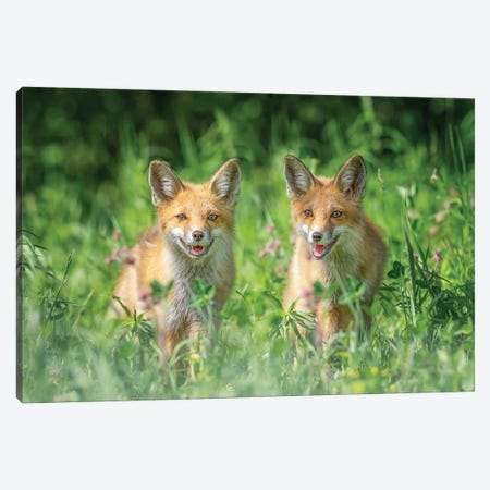 Brothers Canvas Print #LDE7} by Larry Deng Canvas Print