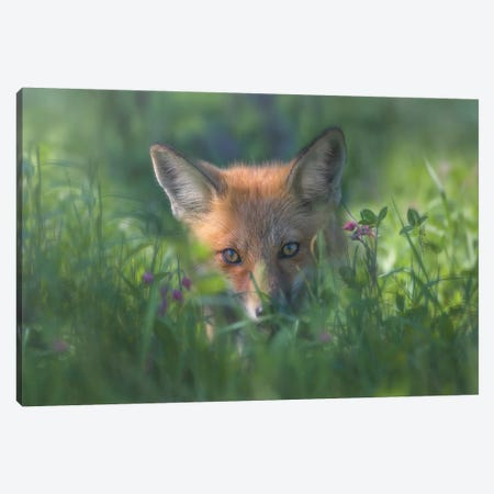 Red Fox Canvas Print #LDE8} by Larry Deng Canvas Wall Art