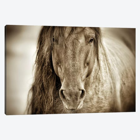 Mustang Sally Canvas Print #LDG8} by Lisa Dearing Canvas Art