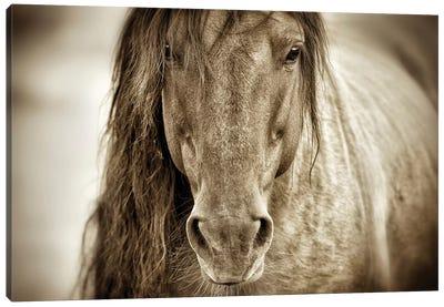 Mustang Sally Canvas Art Print