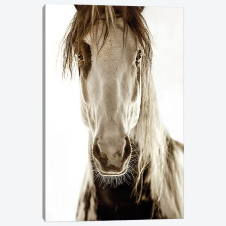 Wilbur Cruz Canvas Print #LDG9} by Lisa Dearing Canvas Artwork